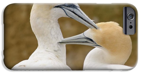 IPhone 6 Case featuring the photograph Gannet Pair 1 by Werner Padarin