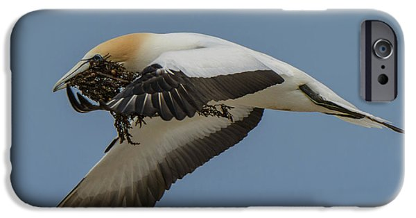 IPhone 6 Case featuring the photograph Gannets 1 by Werner Padarin
