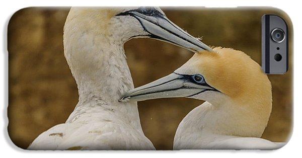 Gannets 4 IPhone 6 Case by Werner Padarin