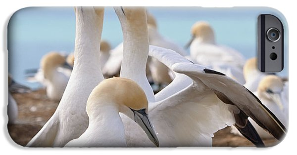 IPhone 6 Case featuring the photograph Gannets by Werner Padarin