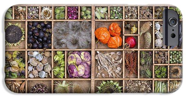 Sunflower Seeds iPhone 6 Case - Garden Seed Pods by Tim Gainey