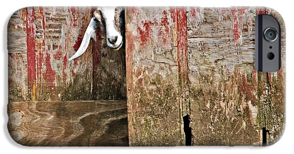 Susan Leggett iPhone Cases - Goat and Old Barn Door iPhone Case by Susan Leggett