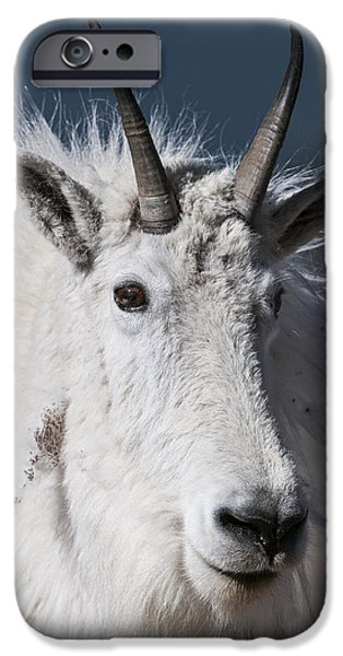 Goat Portrait IPhone 6 Case by Gary Lengyel