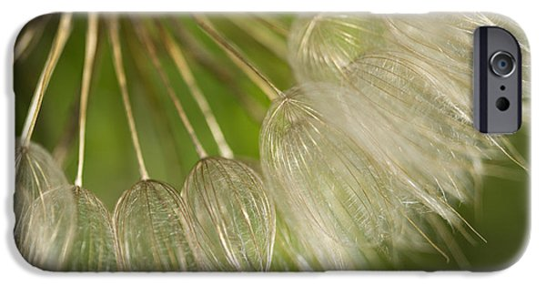 United States iPhone Cases - Goats Beard Wildflower Seedhead iPhone Case by Kathy Clark