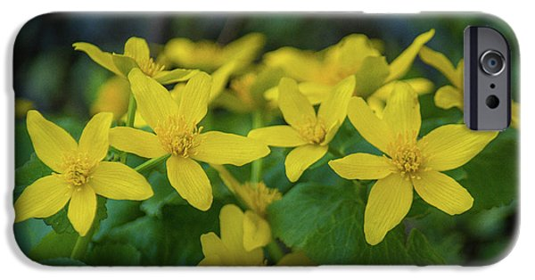 IPhone 6 Case featuring the photograph Gold In The Marsh by Bill Pevlor