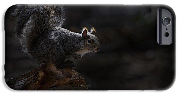 Michael Cummings Mixed Media iPhone Cases - Gray Squirrel on Log iPhone Case by Michael Cummings