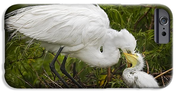 Feeds Chicks iPhone Cases - Great Egret and Chick iPhone Case by Susan Candelario