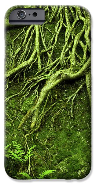 Tree Roots iPhone Cases - Green Growth iPhone Case by Shannon Workman