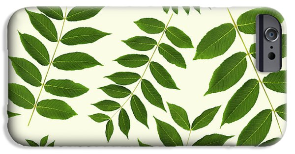 IPhone 6 Case featuring the mixed media Botanical Pattern by Christina Rollo