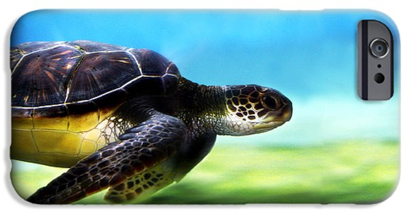Reptile iPhone Cases - Green Sea Turtle 2 iPhone Case by Marilyn Hunt