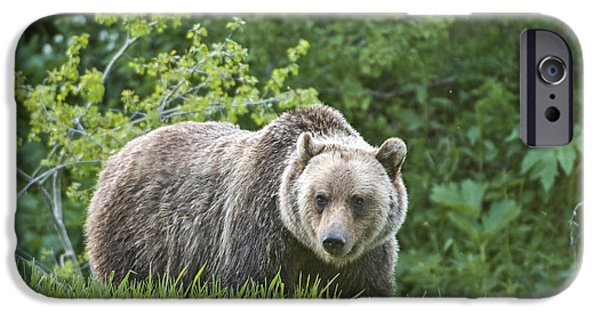 IPhone 6 Case featuring the photograph Grizzly Bear by Gary Lengyel