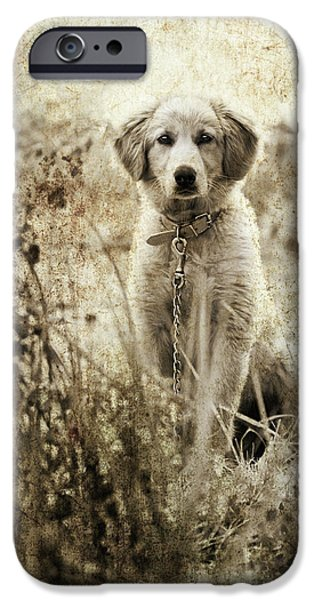 Young Photographs iPhone Cases - Grunge Puppy iPhone Case by Meirion Matthias
