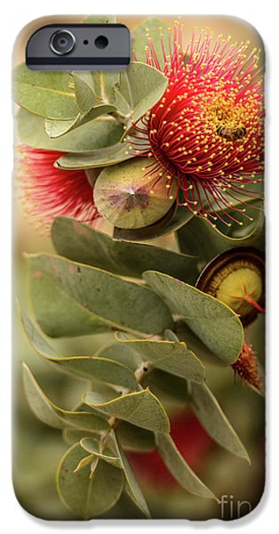 IPhone 6 Case featuring the photograph Gum Nuts by Werner Padarin