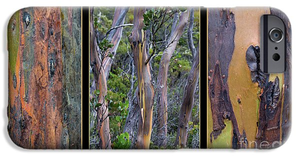 Gum Trees At Lake St Clair IPhone 6 Case by Werner Padarin