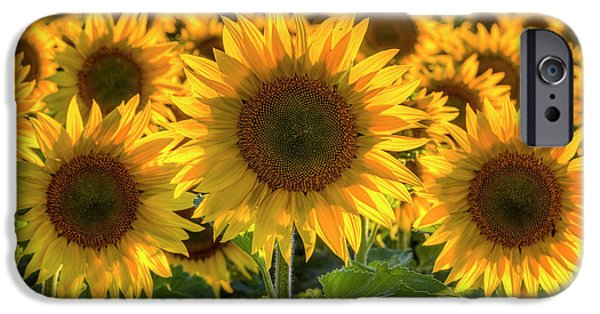Sunflower Seeds iPhone 6 Case - Happy by Mark Kiver