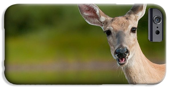 Animals Photographs iPhone Cases - Hello iPhone Case by Sebastian Musial