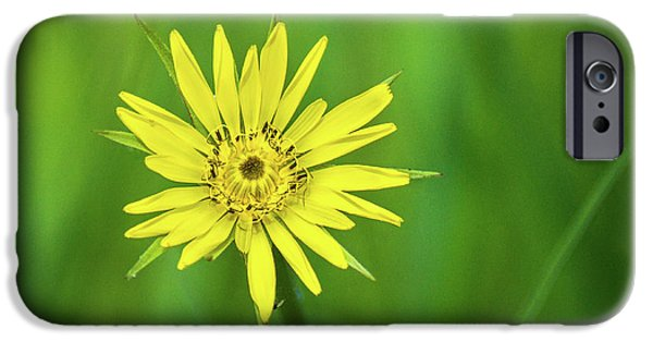 IPhone 6 Case featuring the photograph Hello Wild Yellow by Bill Pevlor