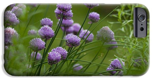 Herb Garden. IPhone 6 Case