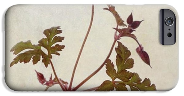 Herb Robert - Wild Geranium  #flower IPhone 6 Case