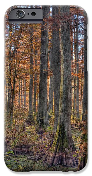 Cypress Trees iPhone Cases - Heron Pond Dawn iPhone Case by Steve Gadomski