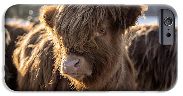 Highland Baby Coo IPhone 6 Case