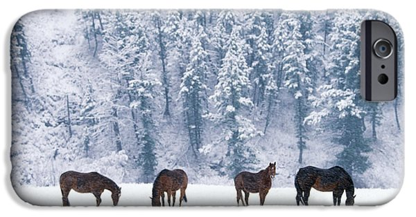 Fauna iPhone Cases - Horses in the Snow iPhone Case by Alan and Sandy Carey and Photo Researchers