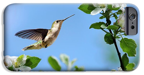 Hummingbird Springtime IPhone 6 Case