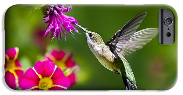 IPhone 6 Case featuring the photograph Hummingbird With Flower by Christina Rollo