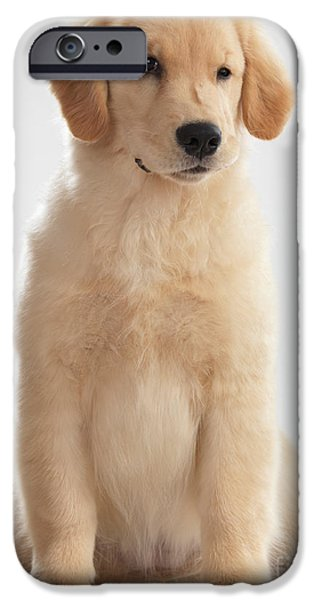 Cut-outs iPhone Cases - Humorous Photo of Golden Retriever Puppy iPhone Case by Oleksiy Maksymenko