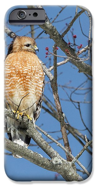 IPhone 6 Case featuring the photograph Hunting by Bill Wakeley