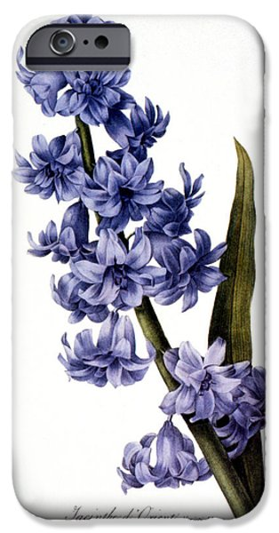 1833 Photographs iPhone Cases - Hyacinth iPhone Case by Granger