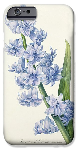 Flowers Drawings iPhone Cases - Hyacinth iPhone Case by Pierre Joseph Redoute