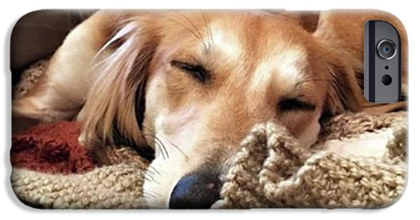It's Been A Hard Day...  #saluki IPhone 6 Case by John Edwards