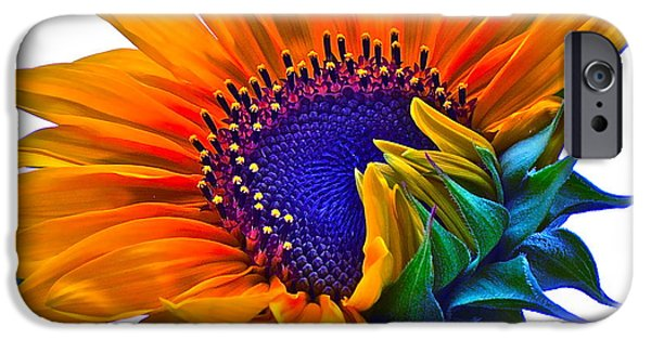 Sunflower Photograph iPhone Cases - Joyful iPhone Case by Gwyn Newcombe