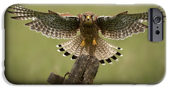 Animal Themes iPhone Cases - Kestrel on Final Approach iPhone Case by Andy Astbury