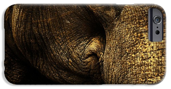 Elephants iPhone Cases - Knowing iPhone Case by Andrew Paranavitana