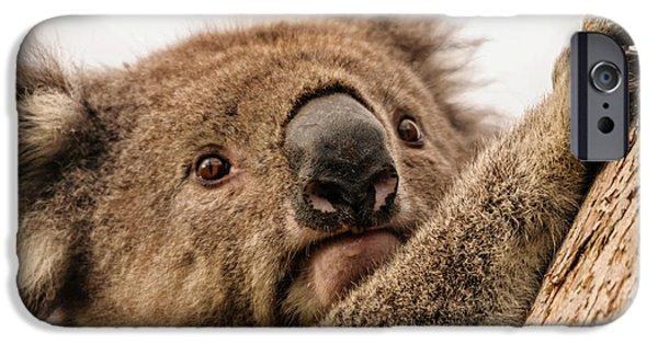 Koala 3 IPhone 6 Case