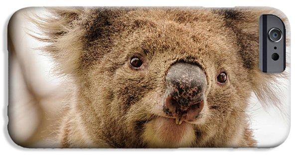 Koala 4 IPhone 6 Case by Werner Padarin