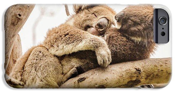 Koala 5 IPhone 6 Case by Werner Padarin