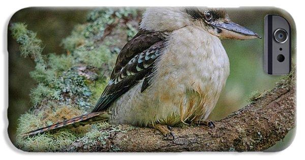 Kookaburra 4 IPhone 6 Case