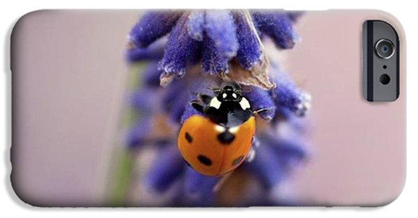 iPhone 6 Case - Ladybird On Norfolk Lavender  #norfolk by John Edwards