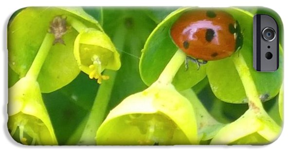 Green iPhone 6 Case - #ladybug Found Some Shelter From The by Shari Warren