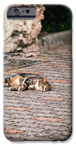 IPhone 6 Case featuring the photograph Lazy Cat    by Silvia Ganora