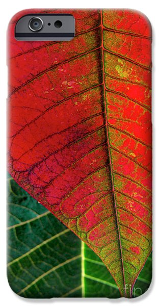 Flora Photographs iPhone Cases - Leafs Macro iPhone Case by Carlos Caetano