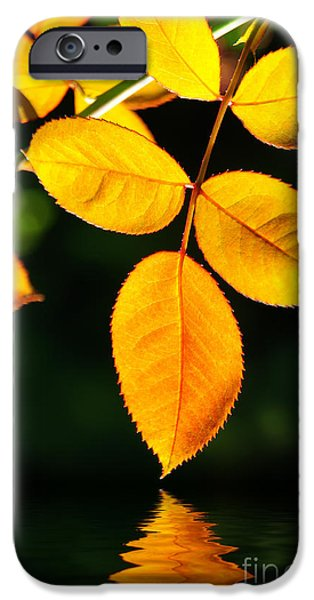 Leaves iPhone Cases - Leafs over water iPhone Case by Carlos Caetano