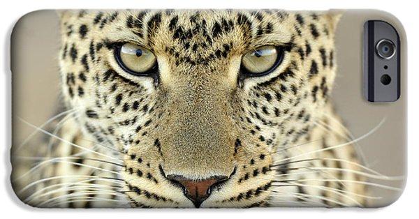 Vertebrata iPhone Cases - Leopard Panthera Pardus Female iPhone Case by Martin Van Lokven