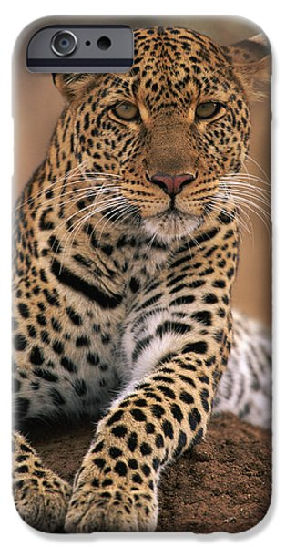 Felidae iPhone Cases - Leopard Panthera Pardus, Masai Mara iPhone Case by Anup Shah