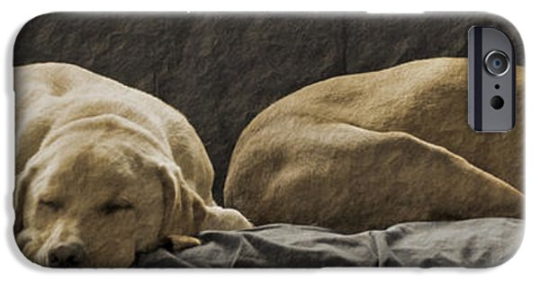 Lazy Dog iPhone Cases - Let sleeping dogs lie iPhone Case by Gwyn Newcombe