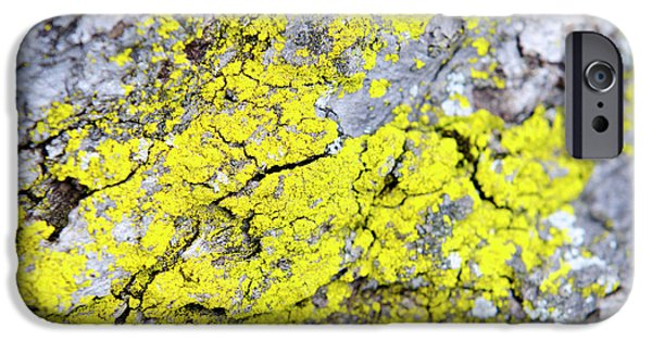 IPhone 6 Case featuring the photograph Lichen Pattern by Christina Rollo