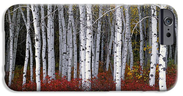 Nature iPhone 6 Case - Light In Forest by Leland D Howard